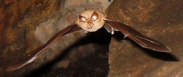Expurgo de Morcegos - Porto Alegre - RS